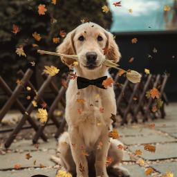 freetoedit dog elegant chic pets