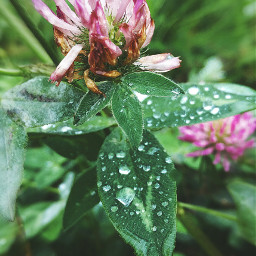 naturephotography flowers autumn september2019 rainyday