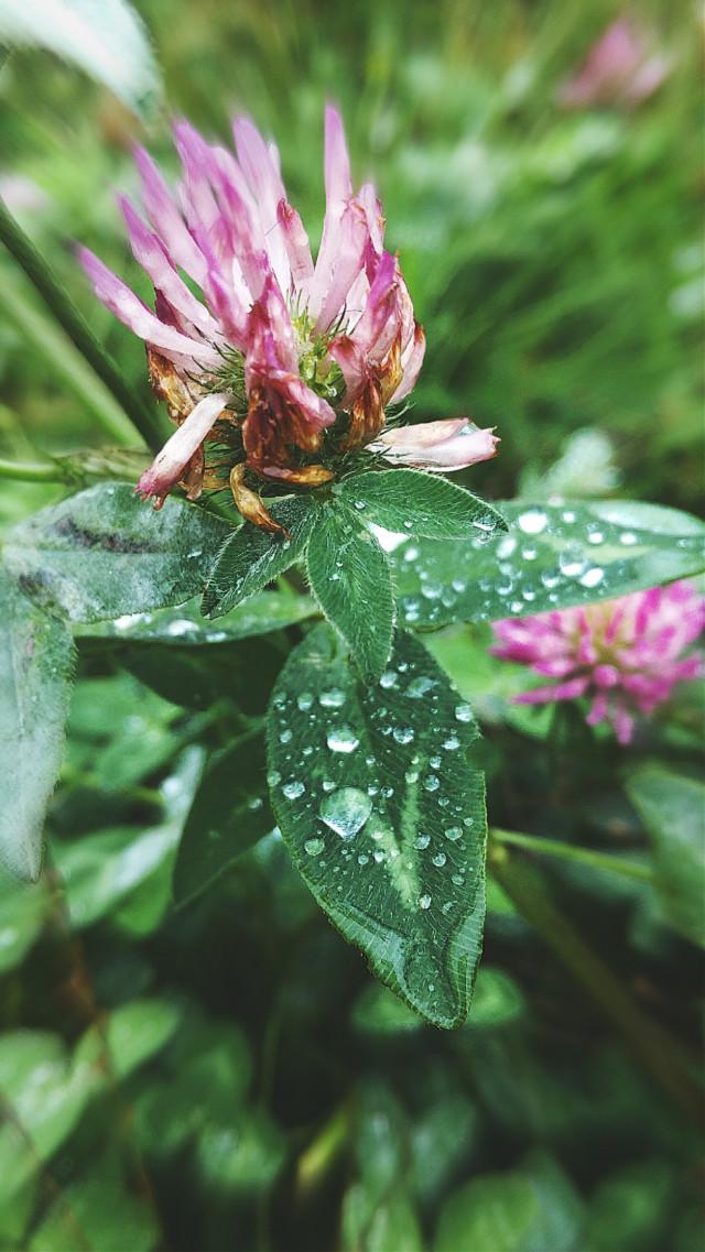 #naturephotography #flowers #autumn #september2019 #rainyday #raindrops ##photography