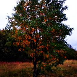 freetoedit nature forest! tree september