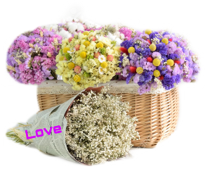 flower freetoedit scdriedflowers driedflowers
