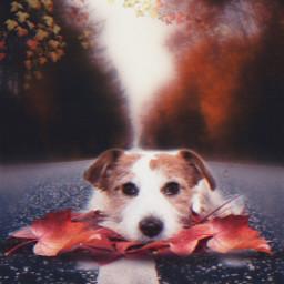 freetoedit picsart top autumnleaves myedit papicks