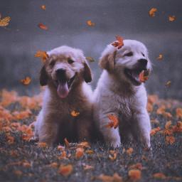 freetoedit cute dogs animals dog srcautumncolors