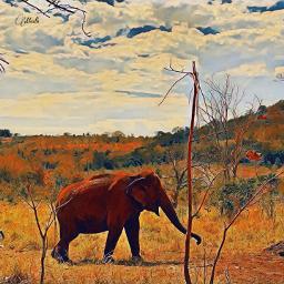 freetoedit savana elefant🐘 animaldocil vidaanimal