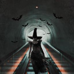 freetoedit witch bat halloween readyforhalloween scary