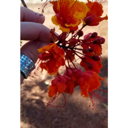photography beautyinnature simplicity love