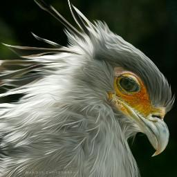 e-go bird birdsphotography colorful e