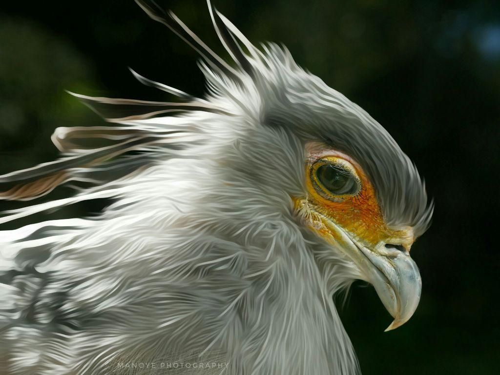 #e-go #bird #birdsphotography #colorful  My picture, not a copy  Keep Smile 🌍
