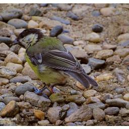 freetoedit birds birdsphotography birdcage wildlife
