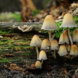 photography nature mushroom macro autumn