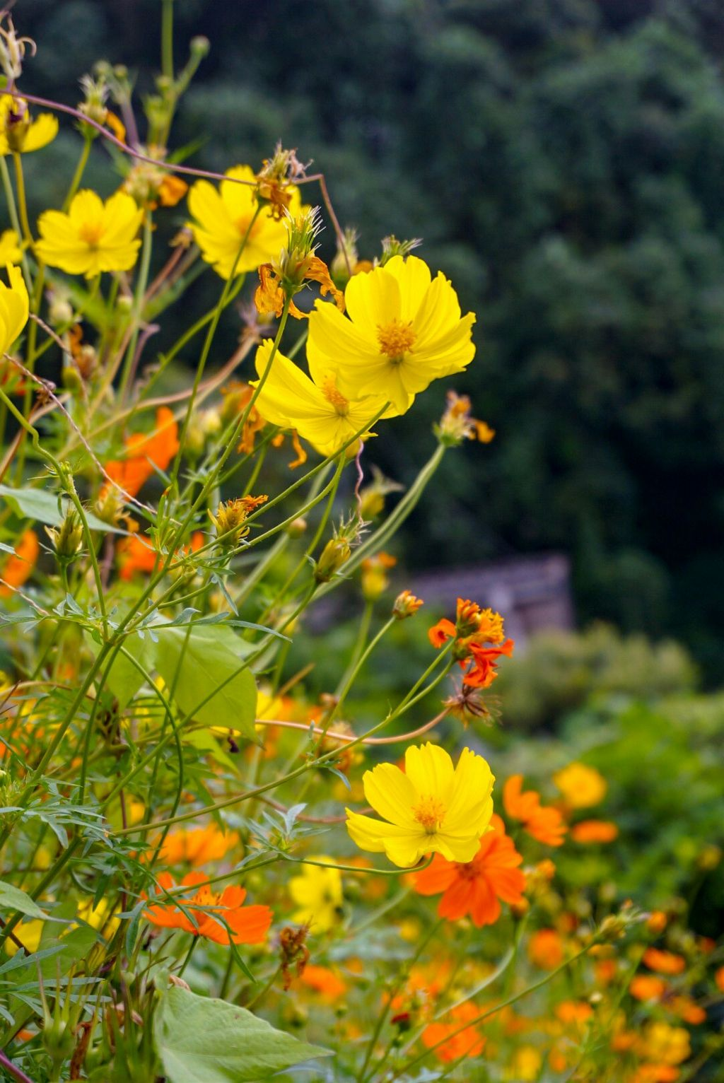 hello autumn #autumnvibes #photography#nature #freetoedit
