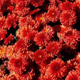 myhome nature fall picsart colorful freetoedit