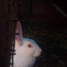 freetoedit remixit rabbit redeyes redeye