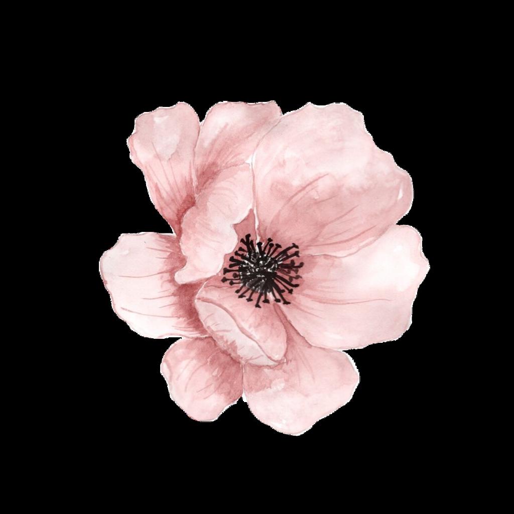 #flowers #floral #flour #flours #aquarelle #picture #stickers #stiker #sticker #freetoedit #акварель #цветок #цветы #рисунок #nature #plant #planets #рисункиакварелью #рисунки #стикер