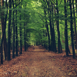 trees nature autumnvibes dodgereffect photography freetoedit