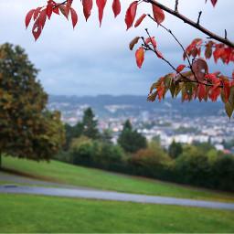 autumn autumnleaves autumncolors fall view