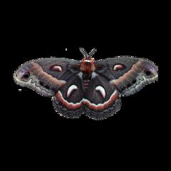 moth moths bugs wings fly freetoedit