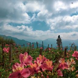 freetoedit nature mobilephotography zenfone zenfone5