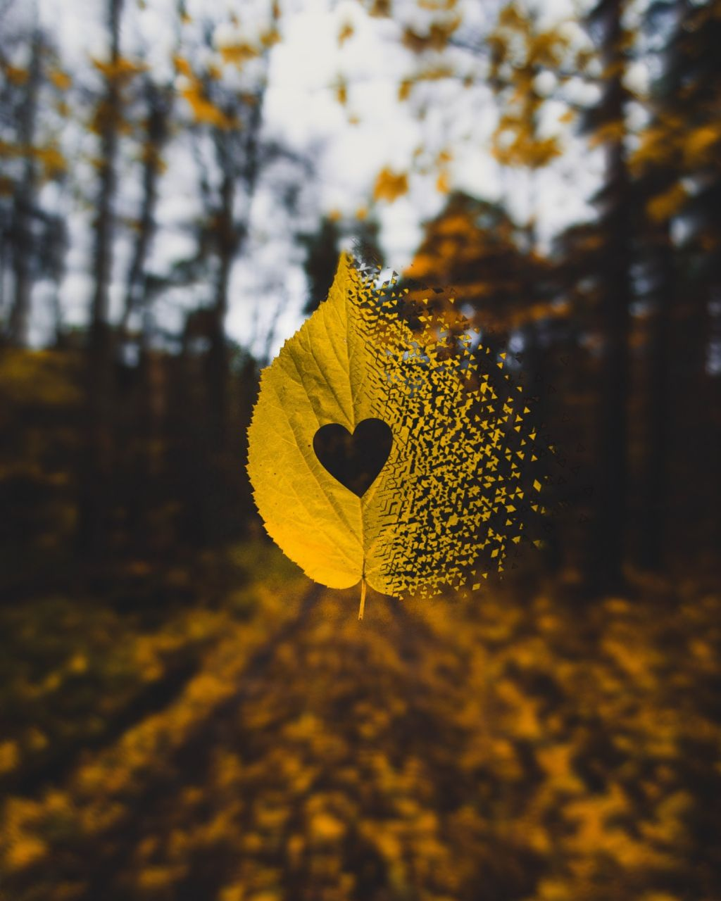 #freetoedit #fall #autumn #leaf