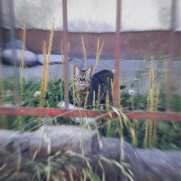 petsandanimals catsphotography