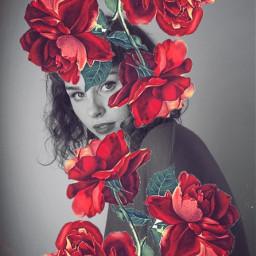 rosesarered rosesarebeautiful rosesticker freetoedit