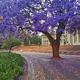 road nature flowers jacaranda purple pcroads