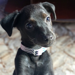 s9 s9plus s9+ dog doglove freetoedit