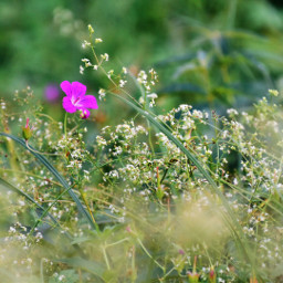 freetoedit wildflowers naturephotography
