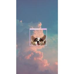 edit wallpaper dog sky clouds