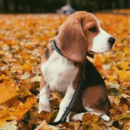 freetoedit dog love