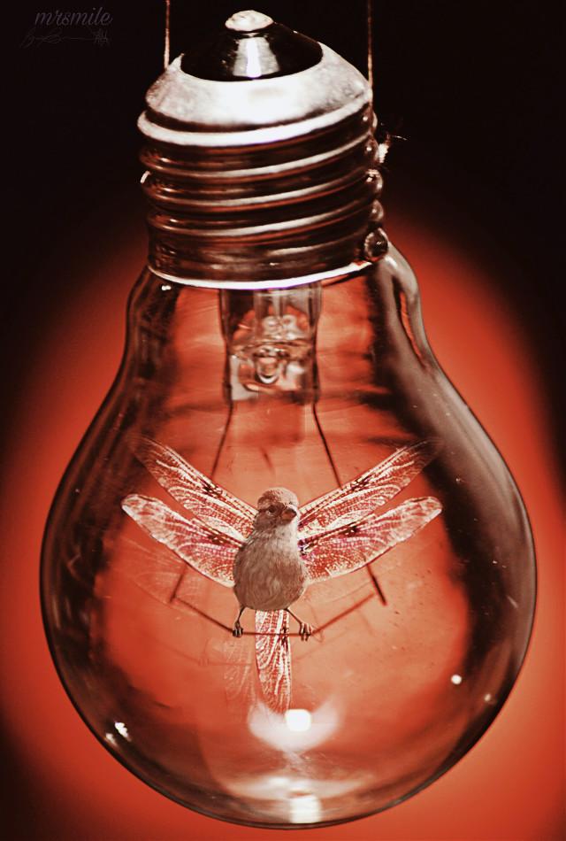 #freetoedit #lynnbrewer #coop #madewithpicsart #surreal #redaesthetic #bird #dragonfly