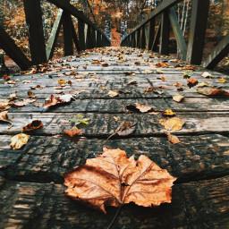 freetoedit autumnvibes leaves bridge ircfloating