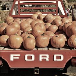 ford truck pumkins pumpkinpatch red