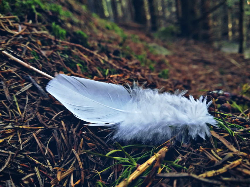 #feather #forest #nature #onthefloor #withe