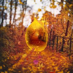 freetoedit autumn autumncolors autumnleafsbrush tinyworld