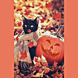 freetoedit leaves orange black brown scarf