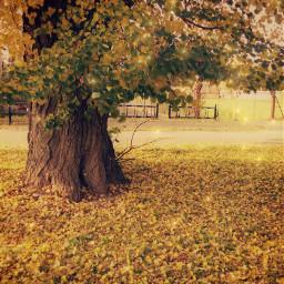 naturephotography autumnvibes autumnleaves autumn october2019