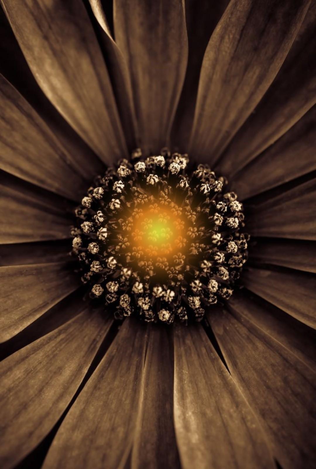 секунду коричневый цвет картинки цветы дачного кооператива появились