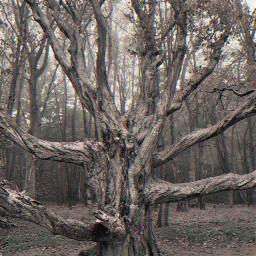freetoedit photo photography mrlb2000 tree