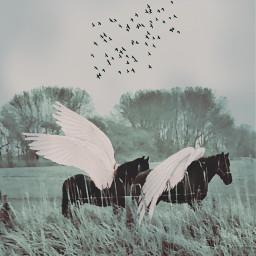 freetoedit horses pegasus pegaso wings