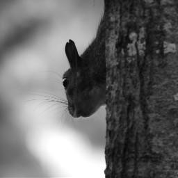 myphotography wildllife squirrel headshot whiskers