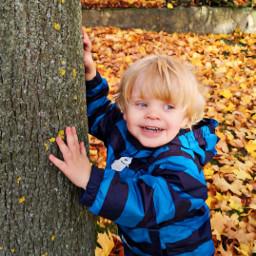 autumn leaves myson tree