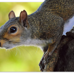 myphotography wildllife squirrel whiskers ears