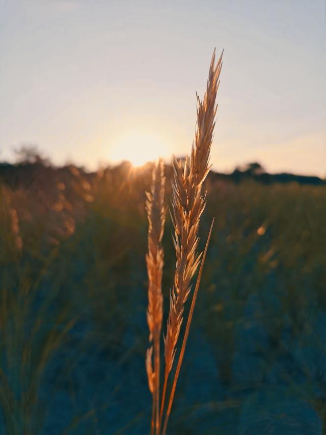 #freetoedit#photo#photography#beauty#nature#beautifull#mrlb2000#sun#naturephotography#sunshine#lol#nice#amazing @pa @freetoedit  happy Weekend ✌😃