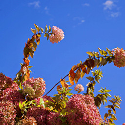 freetoedit outdoorphotography autumnvibes