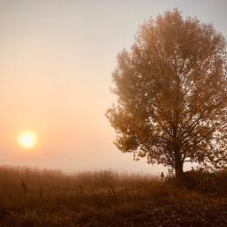 ukraine morning autumn fog sunrise