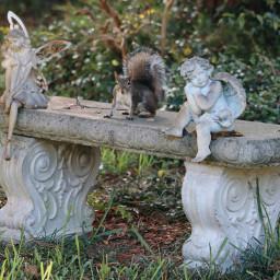 freetoedit squirrelseries squirrel animals onmystreet