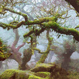 freetoedit wood trees remixit