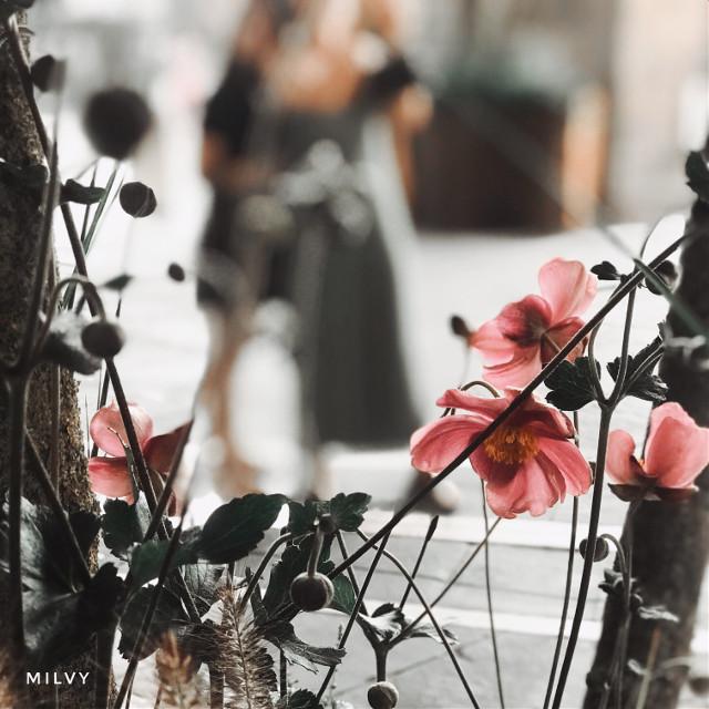 #Autumn #Flowers🍂🌸 #shotoniphone #myphoto #madewithpicsart #picsarteffects #picsartfilters #orangeundertones #desaturated #fall #autumcolors #autumvibes #autumnart #autumncolors #italy #orange #flowers #love