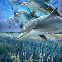 freetoedit dolphins fantasy myedit